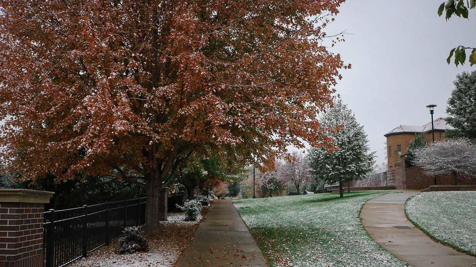 Photo of tree with orange leaves and light snowfall on Morningside's campus taken by Rebekah Meisner.