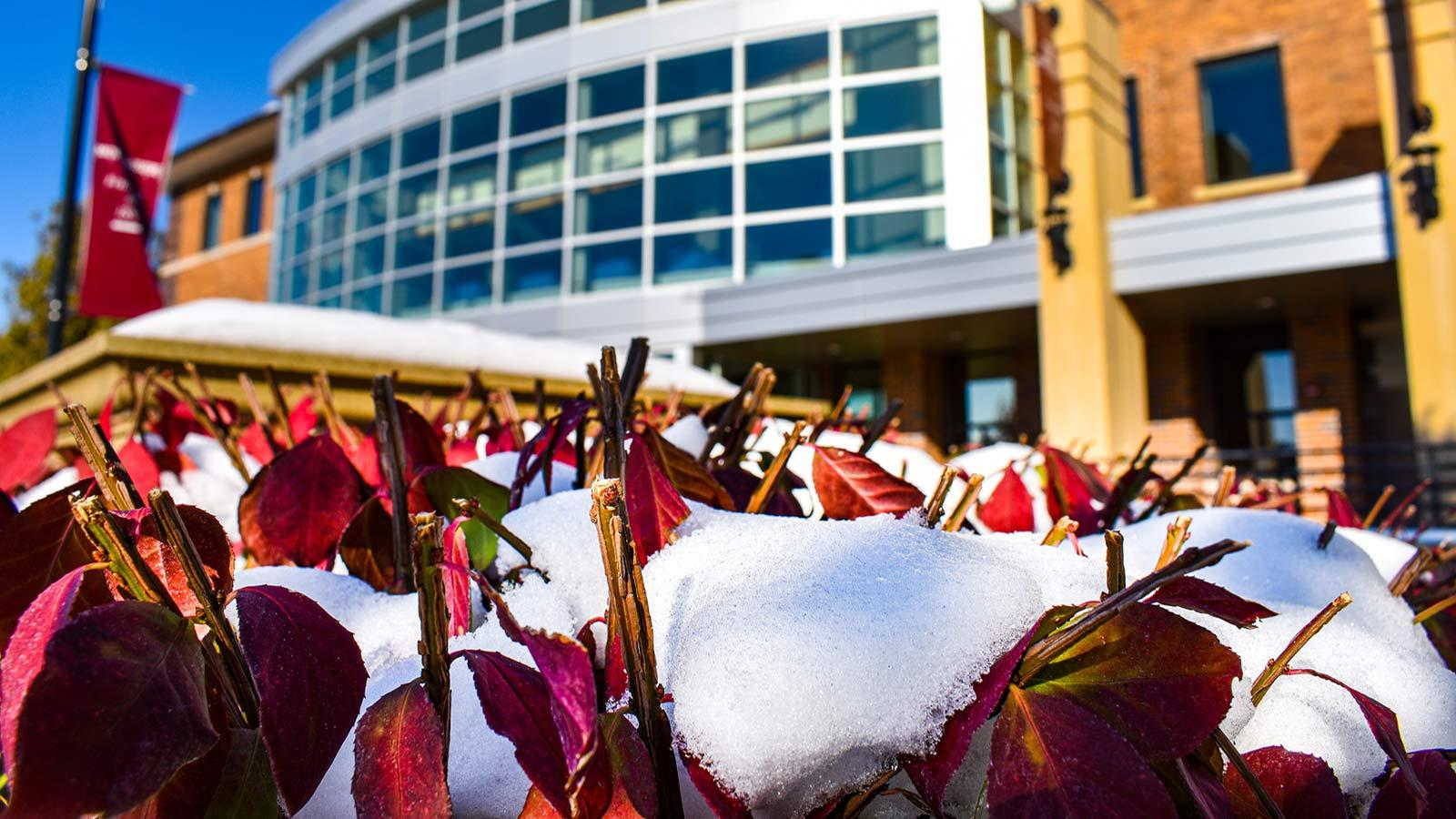 Snow on fallen leaves in front of the library at Morningside College.
